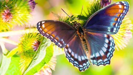 Mơ thấy con bướm chọn số đề gì phát tài?