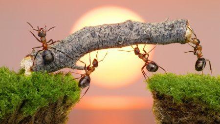 Mơ thấy con kiến đánh con gì để trúng lớn?