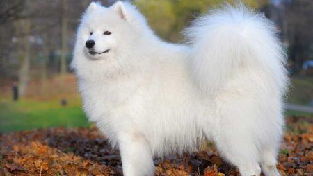 Nằm mơ thấy chó trắng mang đến con số may mắn nào?